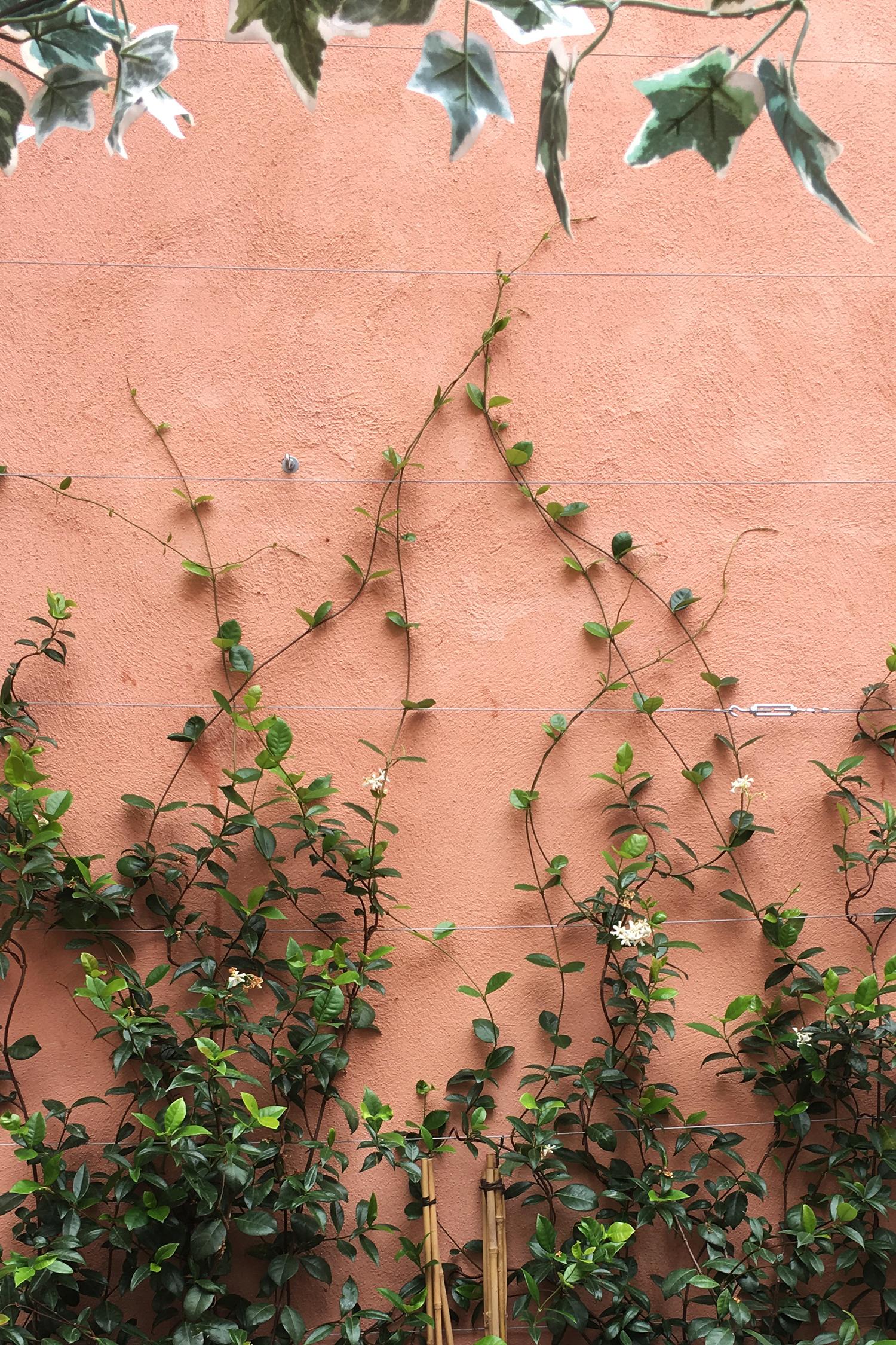 mur couleur terra cota avec des plantes vertes grimpantes